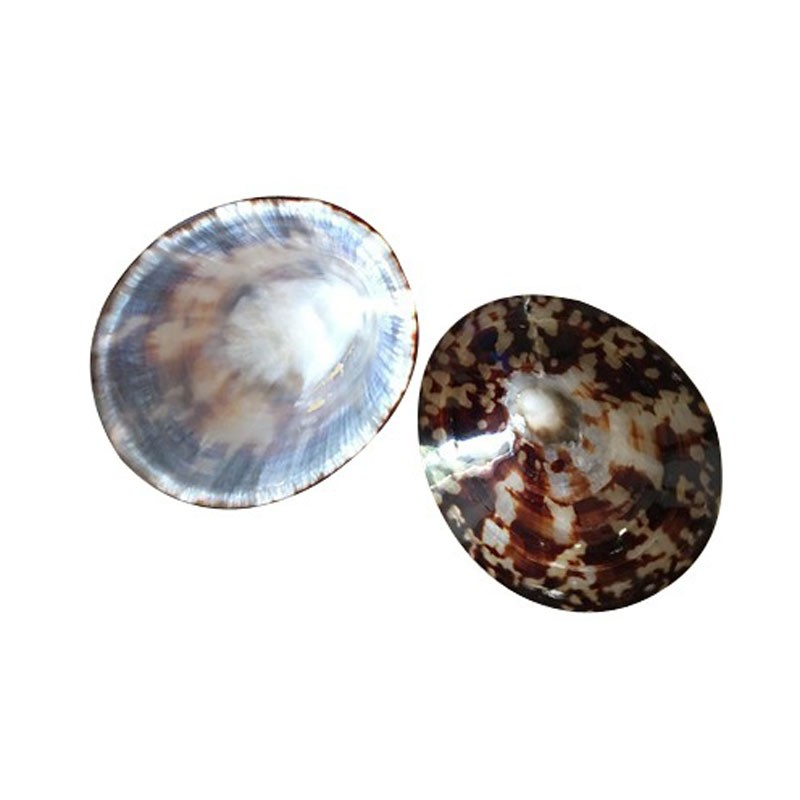 Coquillages d'allaitement Baby Shell 4
