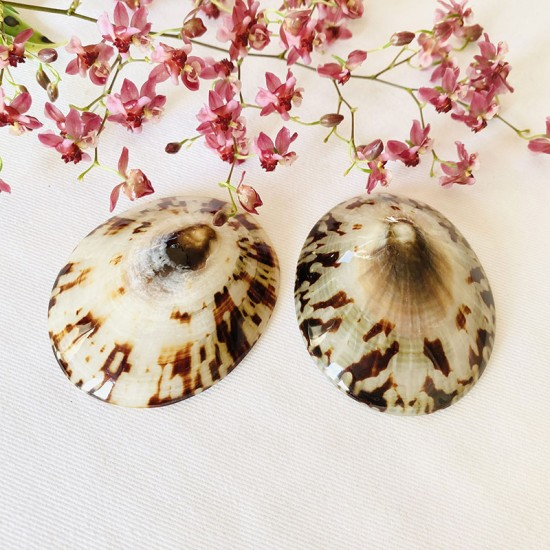 Coquillages d'allaitement Baby Shell 3